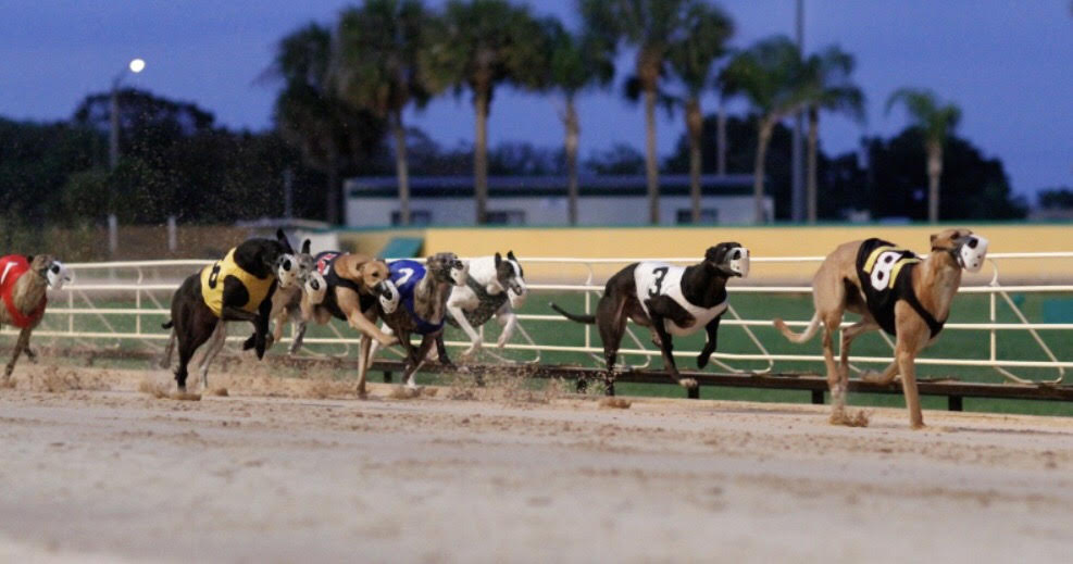 Palm Beach Greyhound Racing Results The Best Beaches In World